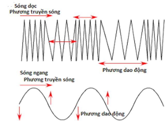 phan loai song co